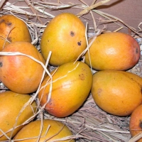 Alphonso Mango Fruit By G patkar at English Wikipedia (Transferred from en.wikipedia to Commons.) [Public domain] via Wikimedia Commons