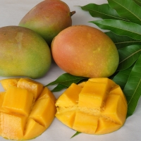 Mango - Bowen By DaleysFruit.com.au [All Rights Reserved]
