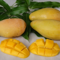 Mango - Kwan By DaleysFruit.com.au [All Rights Reserved]