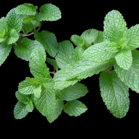 Mint Leaves Herb By Buntysmum [CC0 1.0 (https://creativecommons.org/publicdomain/zero/1.0/deed.en)] From Pixabay
