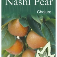Nashi Pear Chojuro plant label By JFT Nurseries [All Rights Reserved, Supplier of DaleysFruit.com.au]