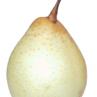 Nashi Ya Li or Japanese Pear By Roger Zenner [CC BY-SA 3.0 (https://creativecommons.org/licenses/by-sa/3.0/)] via Wikimedia Commons