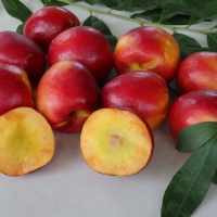 Nectarine sunraycer By DaleysFruit.com.au [All Rights Reserved]