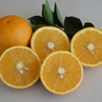 Orange Hamlin By DaleysFruit.com.au [All Rights Reserved]