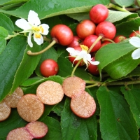 Panama Berry By DaleysFruit.com.au [All Rights Reserved]