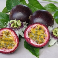 Passionfruit - Black By DaleysFruit.com.au [All Rights Reserved]