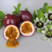 Passionfruit Panama Red Pandora By DaleysFruit.com.au [All Rights Reserved]
