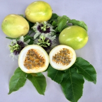 Passionfruit - Panama Gold By DaleysFruit.com.au [All Rights Reserved]