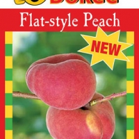 peach okee dokee By Flemings Nurseries [All Rights Reserved, Supplier of DaleysFruit.com.au]