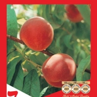 Tasty Zee Peach Label By Flemings Nurseries [All Rights Reserved, Supplier of DaleysFruit.com.au]