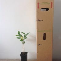 Peanut Butter Tree For Sale Mega Tube