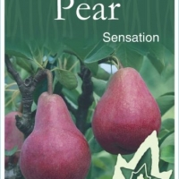 Pear Sensation By JFT Nurseries [All Rights Reserved, Supplier of DaleysFruit.com.au]