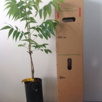 Pecan Apache B For Sale 4 litre Bag