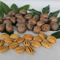 Pecan Shoshoni By DaleysFruit.com.au [All Rights Reserved]