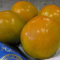 Persimmon Hachiya compliments of phamfatale