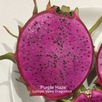 Purple Haze Dragon Fruit Cut in Half showing purple flesh By Lockyer Valley Dragonfruit [All Rights Reserved, Used by Permission]