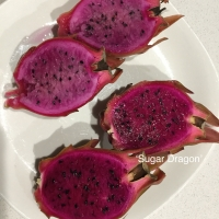 Pitayas - Sugar Dragon and Pink Panther By Lockyer Valley Dragon Fruit [Supplier of DaleysFruit.com.au]