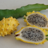 Pitaya yellow