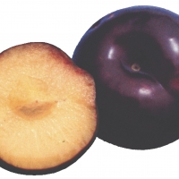 Plumcot Spring Satin By PlantNet [All Rights Reserved, Supplier of DaleysFruit.com.au]