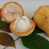 Santol By DaleysFruit.com.au [All Rights Reserved]