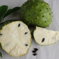 Soursop - fruit