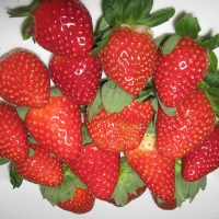 Ruby Gem Strawberry By Sweet Strawberry Runners [Supplier of DaleysFruit.com.au] From http://sweetstrawberryrunners.businesscatalyst.com/gallery