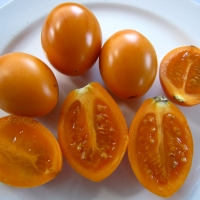 Tamarillo - Orange By DaleysFruit.com.au [All Rights Reserved]
