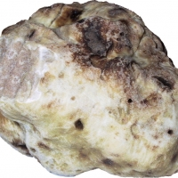 White Truffle Washed By MatthiasKabel [GFDL (http://www.gnu.org/copyleft/fdl.html) or CC-BY-SA-3.0 (http://creativecommons.org/licenses/by-sa/3.0/)], from Wikimedia Commons