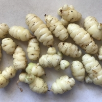 Oca Juliet Tubers By DaleysFruit.com.au [All Rights Reserved]